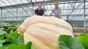Stuart and Ian Paton behind the UK's record breaking heaviest pumpkin